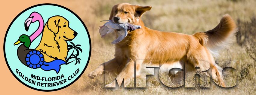 Puppy Referral Mid Florida Golden Retriever Club